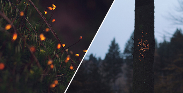 Bioluminescence_feeldesain_00