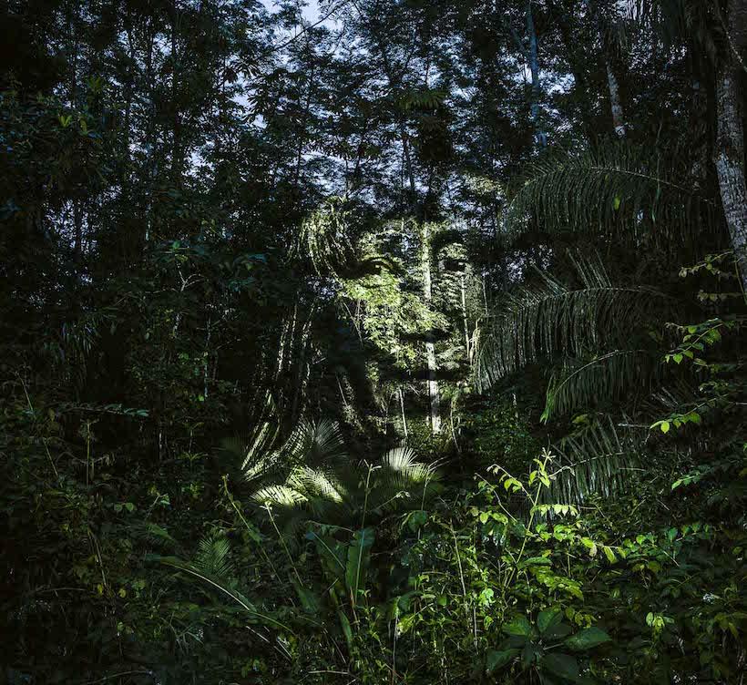 Philippe Echaroux rainforest